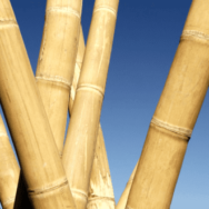 Bamboo Κορμοί